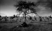 anchoress film